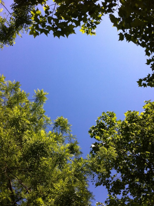 006 Cielo e alberi- 740