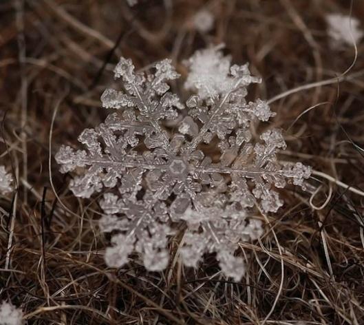 001_fiocco-neve-740