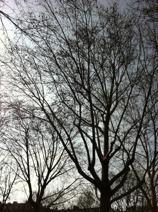 001_alberispogli740