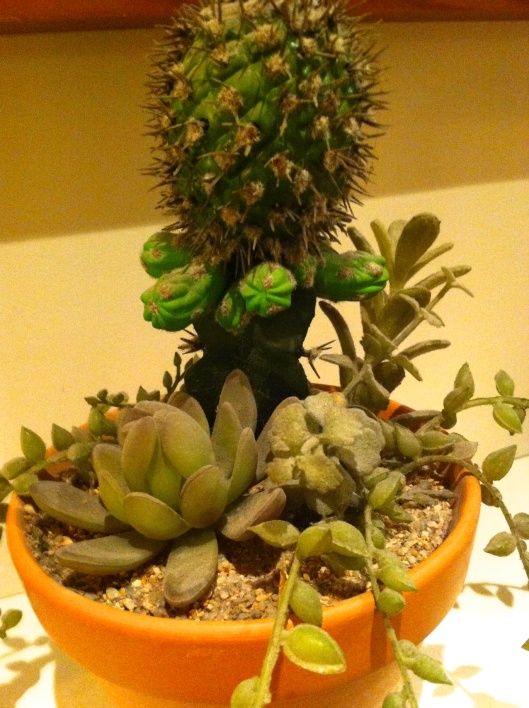 008 plante grasse180 - Version 2